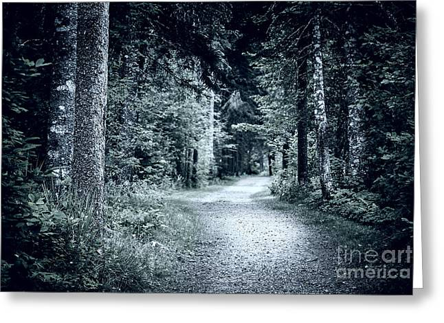 Hiking Greeting Cards - Path in dark forest Greeting Card by Elena Elisseeva