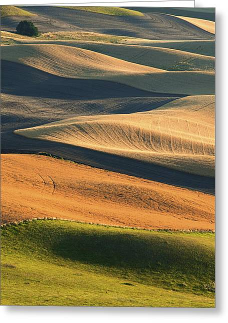 Contour Plowing Greeting Cards - Patterns of the Palouse Greeting Card by Latah Trail Foundation