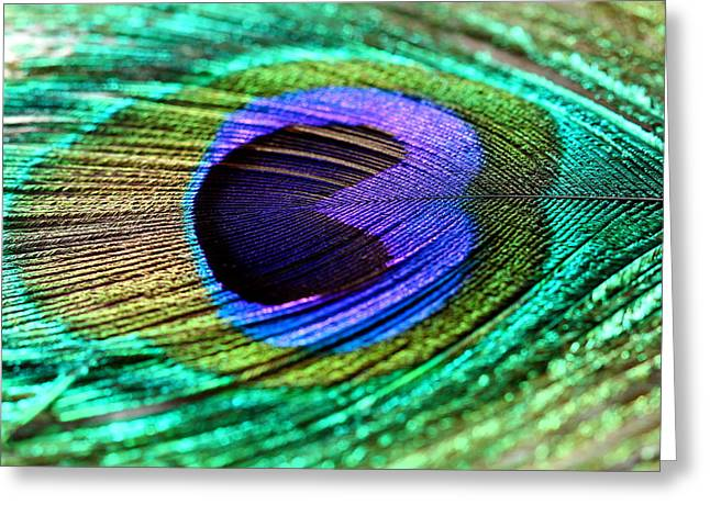 Peacock Feather Greeting Card by Heike Hultsch