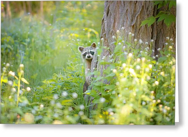 Animal Greeting Cards - Peek A Boo Greeting Card by Carrie Ann Grippo-Pike