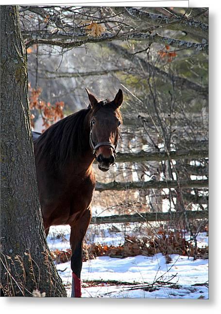 Horse Greeting Cards - Peek a Boo Greeting Card by Davandra Cribbie
