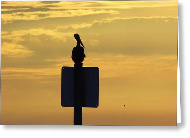 Reflection Of Sun In Clouds Greeting Cards - Pelican At Sunset Greeting Card by D Hackett