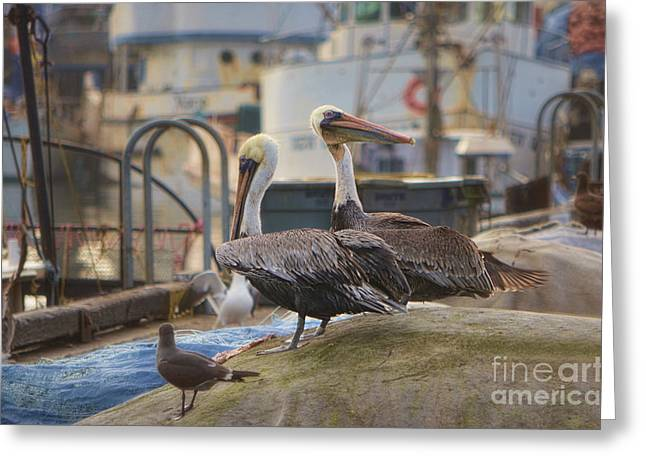 Marin County Greeting Cards - Pelican Duo Greeting Card by Donna Van Vlack