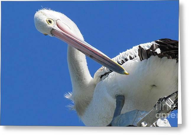 Joyce Woodhouse Greeting Cards - Pelican Greeting Card by Joyce Woodhouse