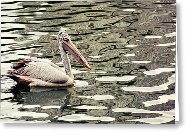 Colombos Greeting Cards - Pelican with Abstract Water Reflections Greeting Card by Jenny Rainbow