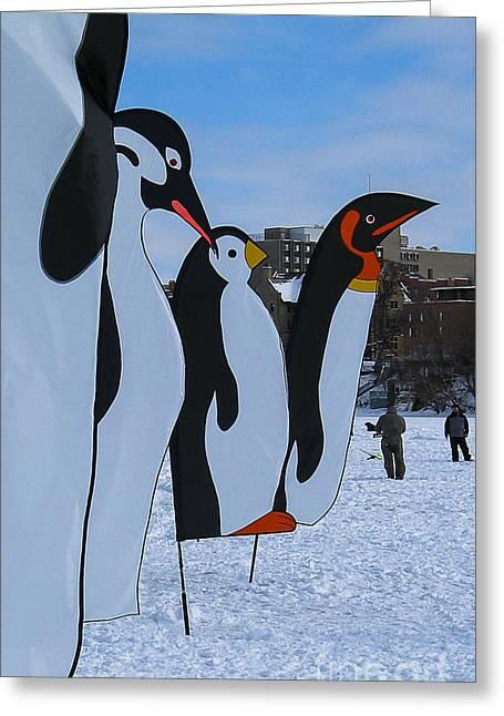 Lake Mendota Greeting Cards - Penguins Greeting Card by Steven Ralser