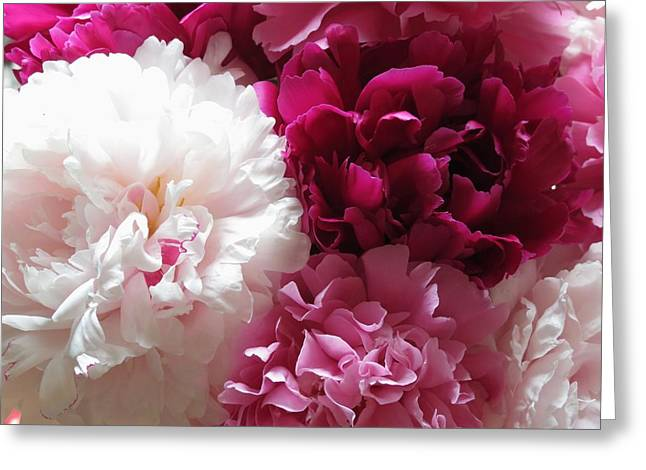 Spring Bulbs Greeting Cards - Peonies  Greeting Card by Rebecca Overton