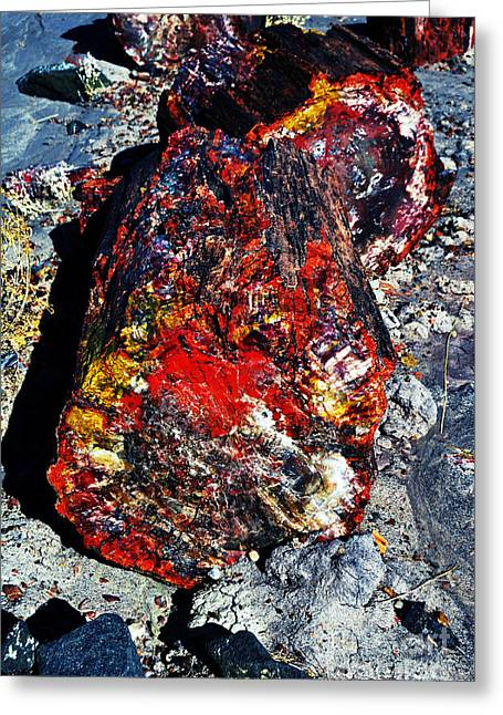 Travelpixpro Greeting Cards - Petrified Wood Log Rainbow Crystalization at Petrified Forest National Park Greeting Card by Shawn O
