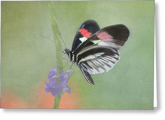 Kim Photographs Greeting Cards - Piano Key Butterfly Greeting Card by Kim Hojnacki