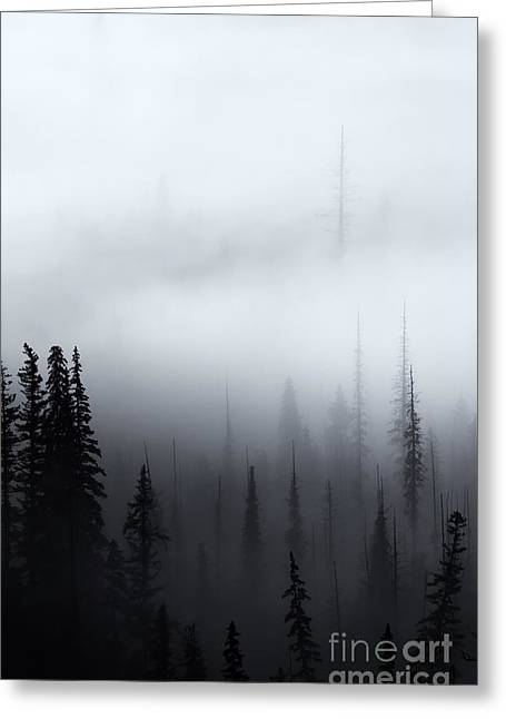 Pine-mist Greeting Cards - Piercing the Clouds Greeting Card by Mike  Dawson