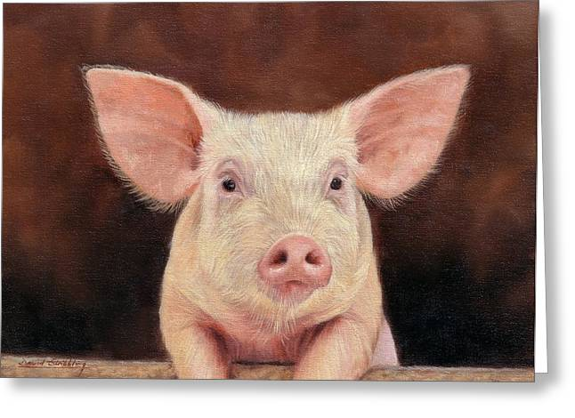 Pigs Greeting Cards - Pig Greeting Card by David Stribbling
