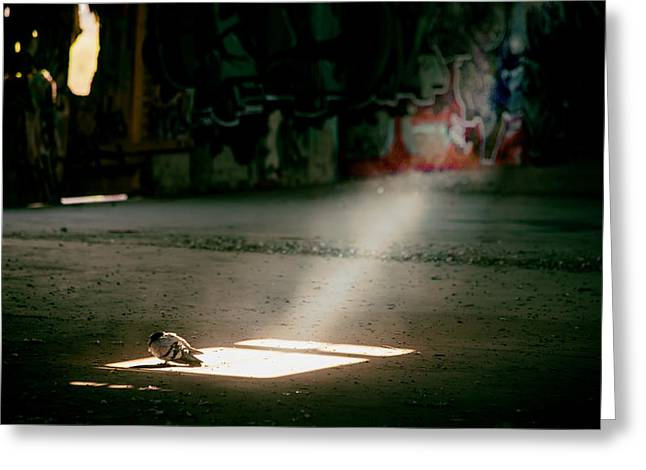 Shafts Of Light Greeting Cards - Pigeon in the Light Greeting Card by Mountain Dreams