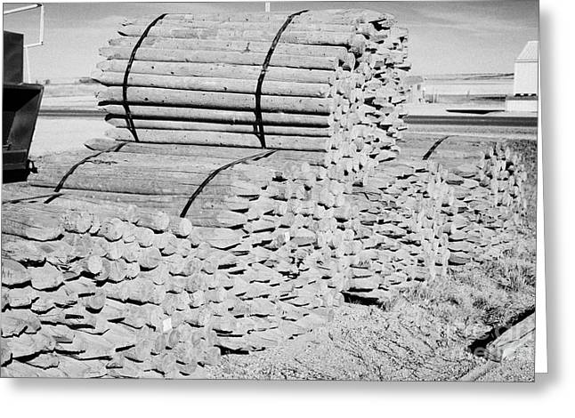 Wooden Stake Greeting Cards - piles of wooden fencing poles at a mill Saskatchewan Canada Greeting Card by Joe Fox