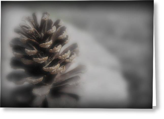 Sc Greeting Cards - Pine Cone With a Hint of Color Greeting Card by Kelly Hazel