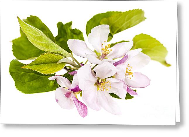 Pink Apple Blossoms Greeting Card by Elena Elisseeva