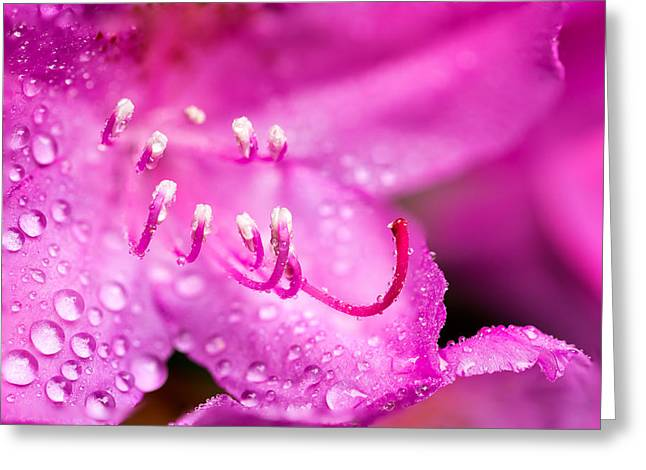 Abstract Rain Greeting Cards - Pink Dreams Greeting Card by Mary Jo Allen