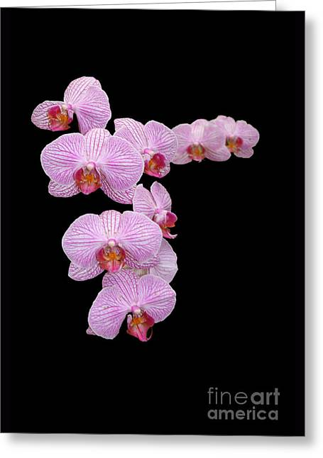 Pink Orchids Greeting Card by Tom Prendergast