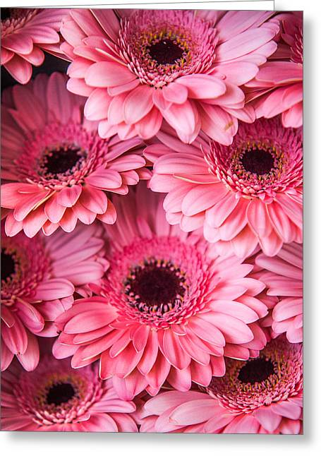 Square Format Greeting Cards - Pink Peach Gerbera. Amsterdam Flower Market Greeting Card by Jenny Rainbow