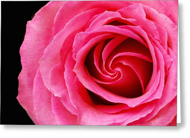 Petal Greeting Cards - Pink Rose  Greeting Card by Jim Hughes