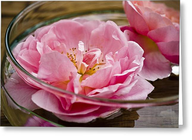 Flower Pictures Greeting Cards - Pink Roses Greeting Card by Frank Tschakert