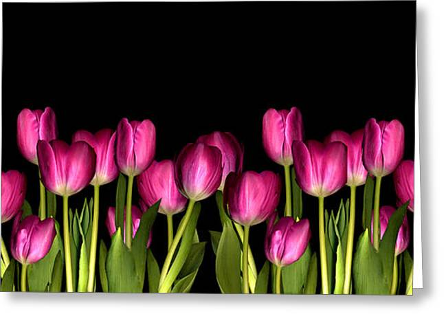 pink tulip Greeting Card by Jacqui Martin
