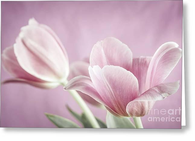 Purple Tulip Flowers Greeting Cards - Pink tulips Greeting Card by Elena Elisseeva