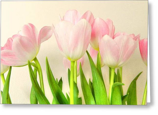 Pale Pink Greeting Cards - Pink Tulips Greeting Card by Sharon Lisa Clarke