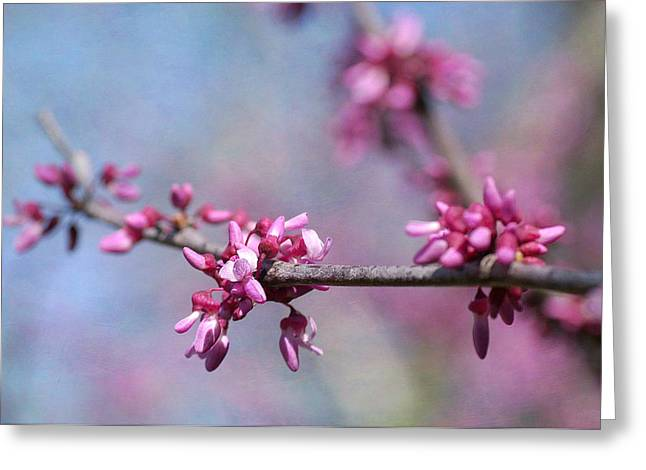 Pink Blossoms Greeting Cards - Pinkness Greeting Card by Fraida Gutovich