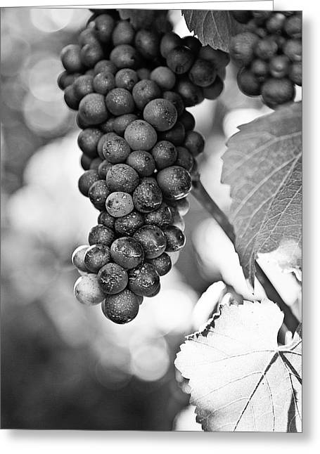 Winery Photography Greeting Cards - Pinot Noir Greeting Card by Scott Pellegrin