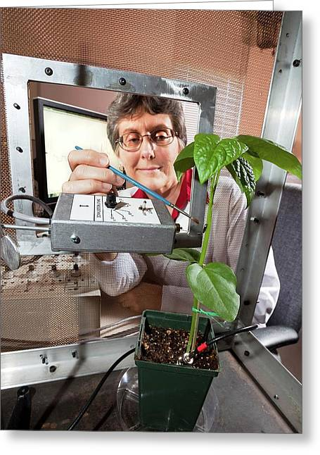 Plant Disease Transmission Research Greeting Card by Stephen Ausmus/us Department Of Agriculture