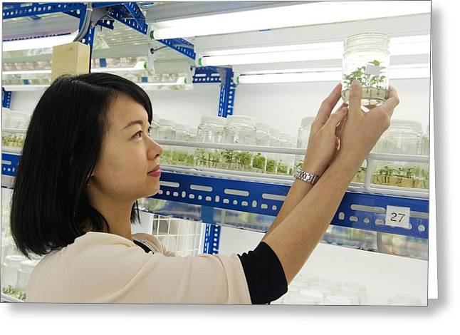 People Greeting Cards - Plant researcher, Malaysia Greeting Card by Science Photo Library