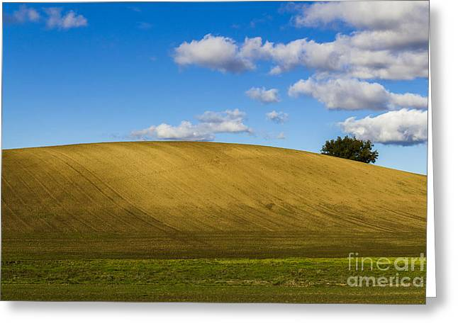 Mud Season Greeting Cards - Plowed field on a clear hill with tree Greeting Card by Armin Staudt