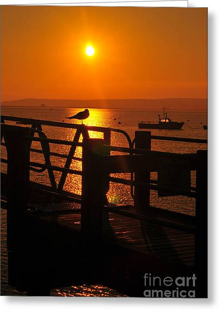 Plymouth Massachusetts Greeting Cards - Plymouth Harbor Sunrise Greeting Card by Catherine Reusch  Daley