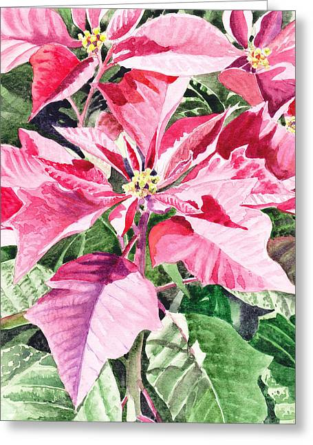 Poinsettia Greeting Card by Irina Sztukowski