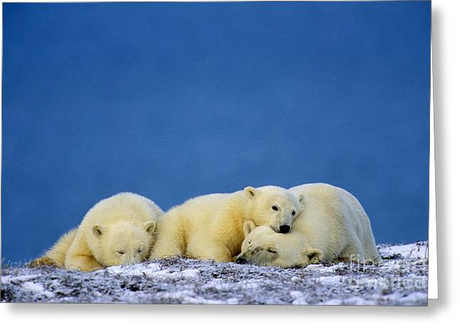 Alaska Greeting Cards Greeting Cards - Polar Bears Greeting Card by Thomas and Pat Leeson