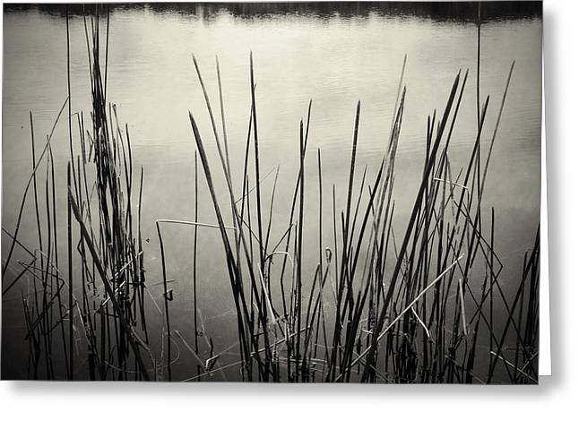 Bog Greeting Cards - Pond Greeting Card by Les Cunliffe