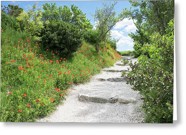 Poppies On The Grounds Of Les Baux Greeting Card by Emily Wilson