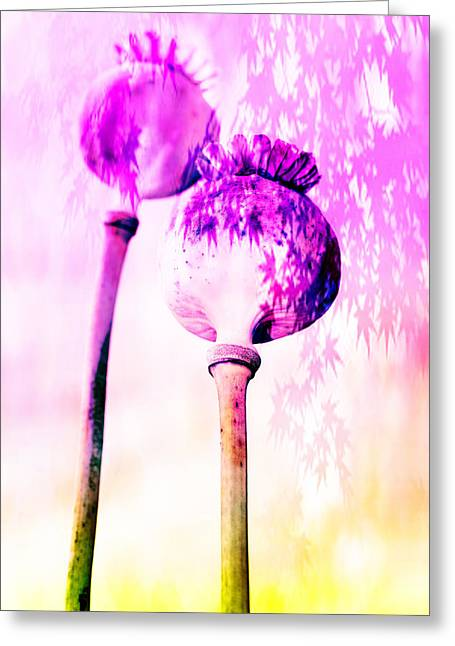 Europe Mixed Media Greeting Cards - Poppy buds Greeting Card by Toppart Sweden