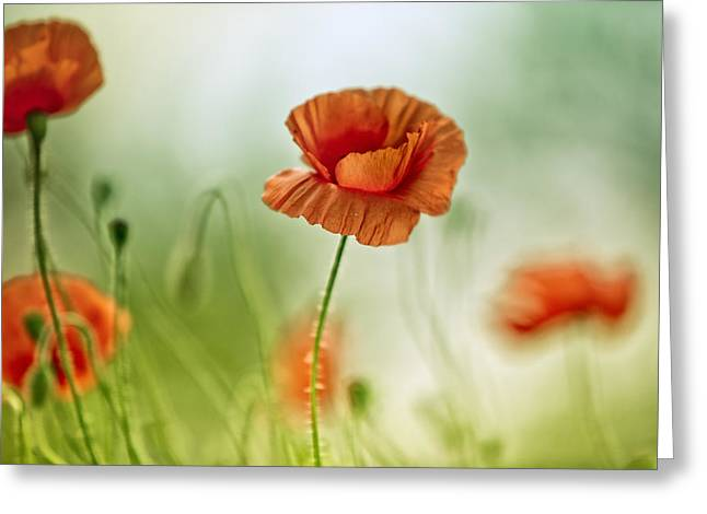 Corn Greeting Cards - Poppy Meadow Greeting Card by Nailia Schwarz