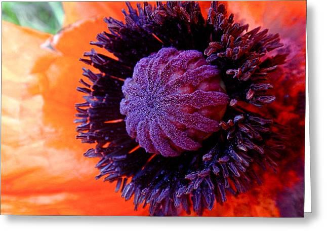 Orange Poppy Greeting Cards - Poppy Greeting Card by Rona Black