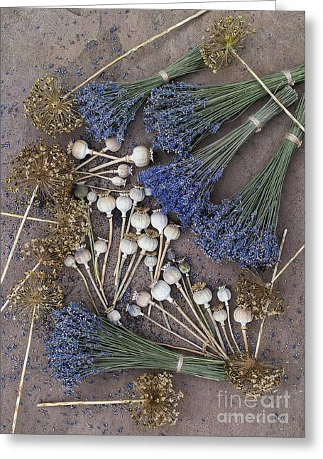 Harvest Art Greeting Cards - Poppy seed pods and dried lavender Greeting Card by Tim Gainey