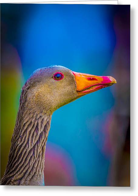 Mother Goose Greeting Cards - Portrait Of Greylag Goose, Iceland Greeting Card by Panoramic Images