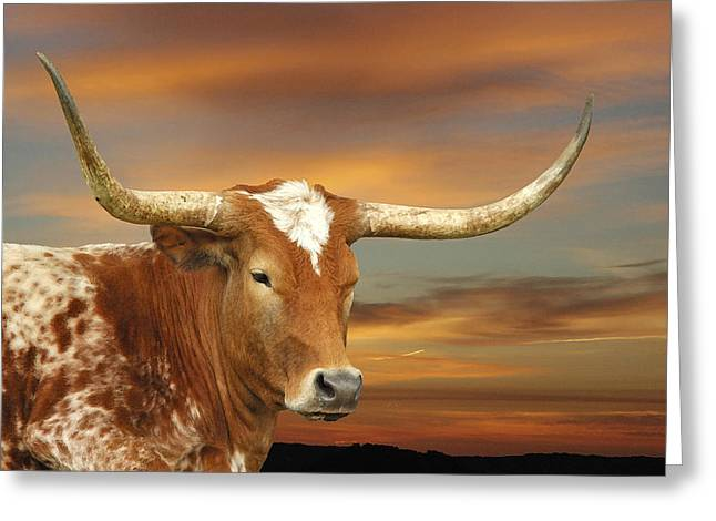 Texas Longhorn Cow Greeting Cards - Portrait of Porter Greeting Card by Robert Anschutz