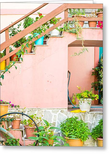 Flight Of Stairs Greeting Cards - Pot plants Greeting Card by Tom Gowanlock