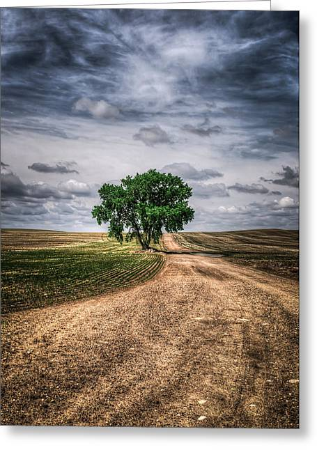 Old Roadway Greeting Cards - Prairie Tree Greeting Card by Brandon Smith