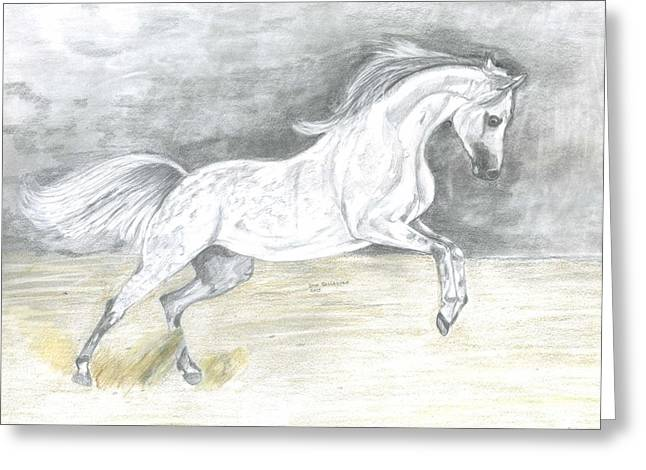 Wild Life Drawings Greeting Cards - Prancing Arabian  Greeting Card by Don  Gallacher