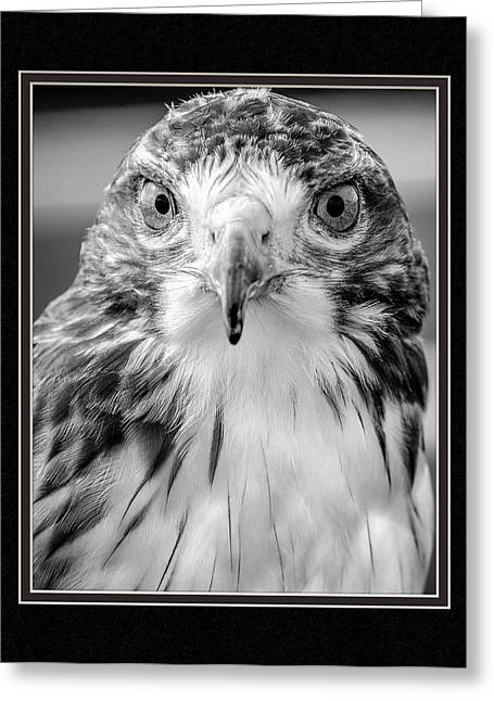 Matting Greeting Cards - Predatorial Glare Greeting Card by Charles Feagans