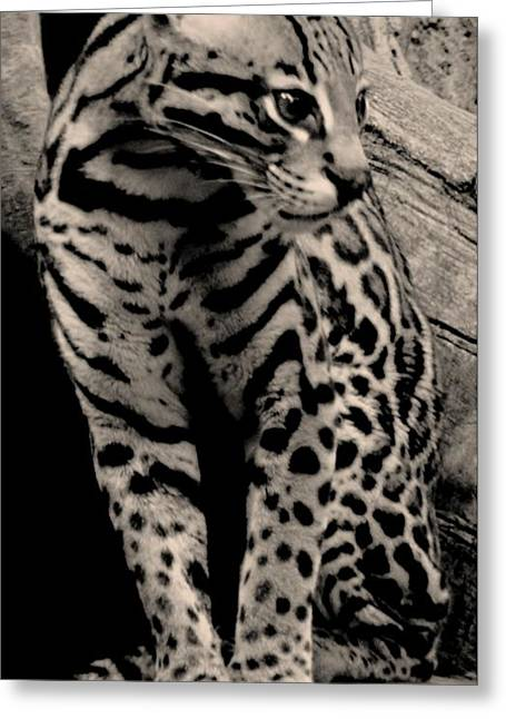 Struckle Greeting Cards - Pretty Cat Greeting Card by Kathleen Struckle
