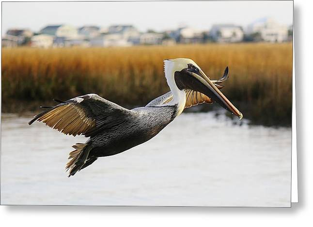 Pretty Pelican Greeting Card by Paulette Thomas