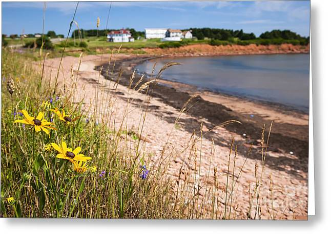 Princes Greeting Cards - Prince Edward Island coastline Greeting Card by Elena Elisseeva